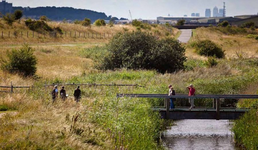 professor_mark_brearley_-_rainham_marshes