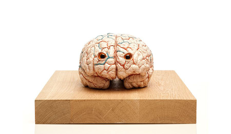 The Brain of a Messenger of Death, 2011 - Jan Fabre