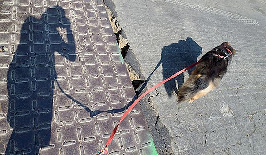 Human shadow of a person with a dog on a lead