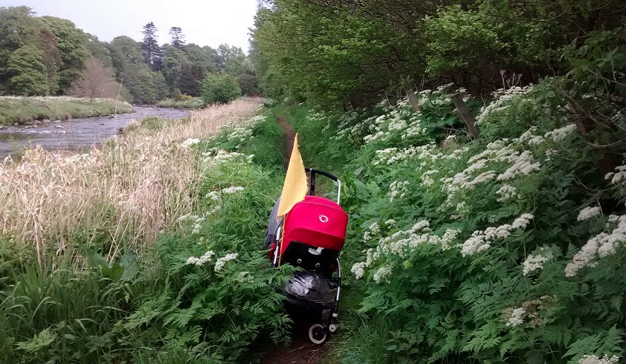 a pram discarded on an overgrown path