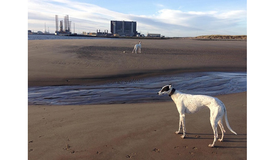 A sandy beach with two dogs standing far from each other and the view of the industrial factory in the background
