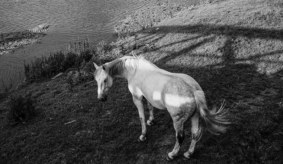 Black and White photo of a horse in a field