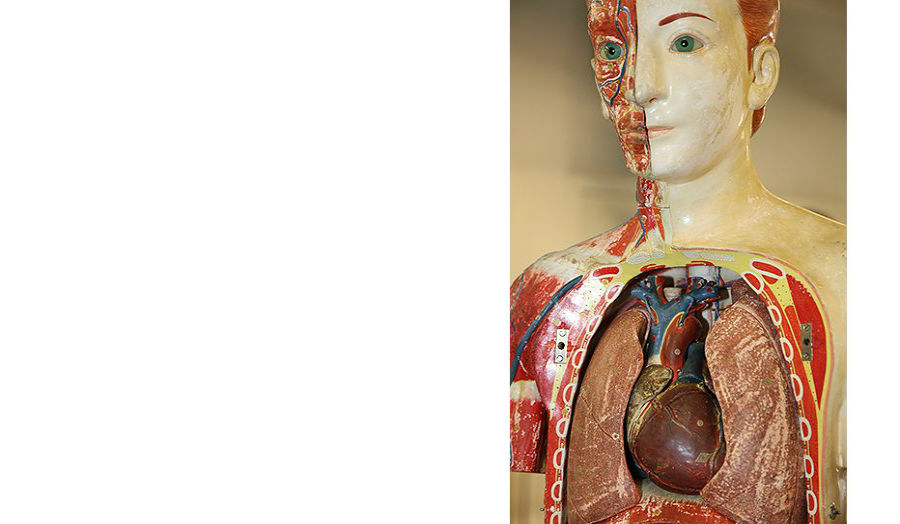 Anatomical Manikin Ornament Studio