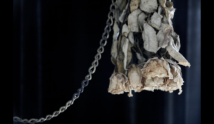 Upside down hanged dried roses
