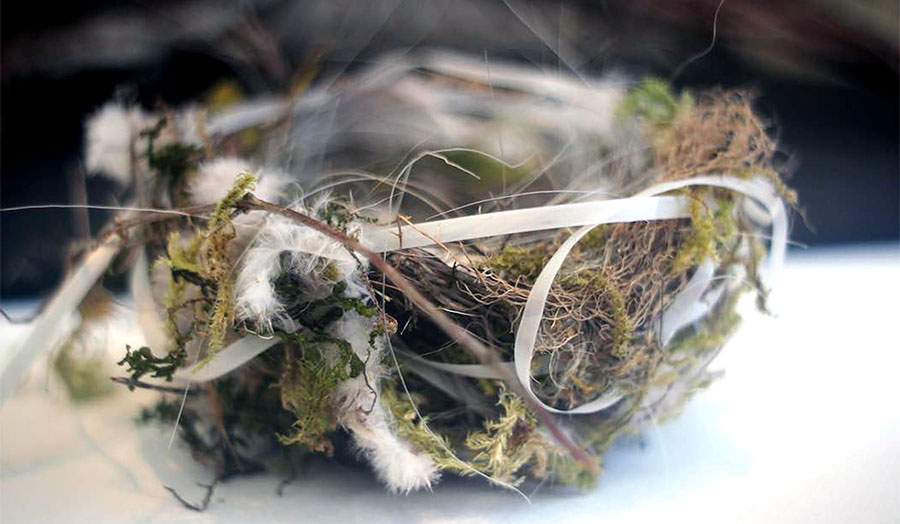 Photo: Bird nest with intertwined twigs, moss, polyethylene bands, and other found materials.