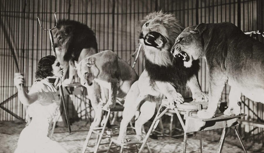 1940s black and white film still of female lion-tamer and 4 snarling lions