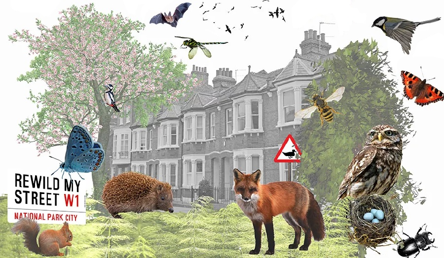Collage of London street with wildlife