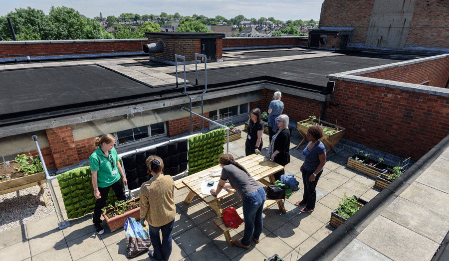 The Rooftop Gardens on Holloway Road