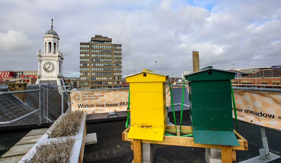 The bee hives on the roof at London Met's Holloway campus